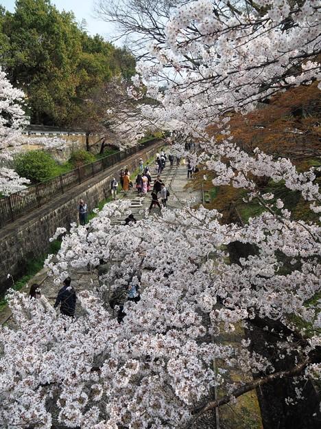 Photos: 桜並木:蹴上インクライン桜05