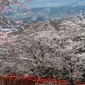 Photos: 鳥居の向こうの山並み:丸高稲荷神社桜04