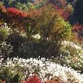 秋の彩:紅葉08