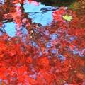 水辺の秋:紅葉01