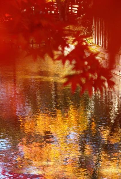 染まる水面:紅葉04