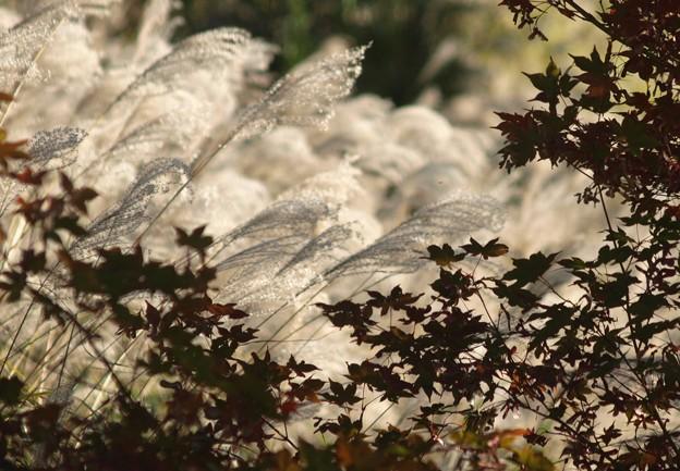 秋の煌めき:紅葉07