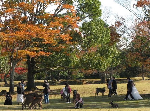 人それぞれの秋:奈良公園03