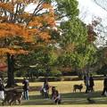 Photos: 人それぞれの秋:奈良公園03