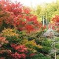 Photos: 鈴虫寺:惜秋京都02
