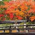 Photos: 西芳寺:惜秋京都04