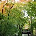 Photos: 地蔵院:惜秋京都05