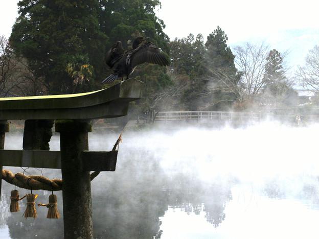 一瞬:金鱗湖01