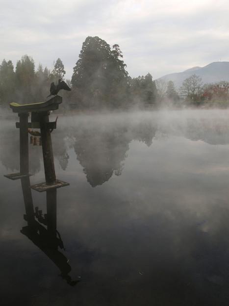 Photos: 静寂:金鱗湖04