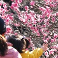 Photos: お花ちょうだい:観梅02
