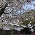 Photos: 旧代官所長屋門の桜