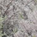 Photos: 春色景色