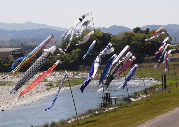 清流吉野川に泳ぐ