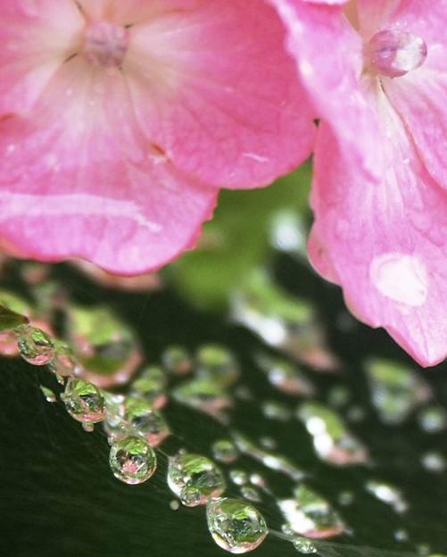 雨粒の宝石箱