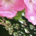 Photos: 雨粒の宝石箱