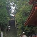Photos: 雨の上り参道