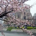 写真: 桜~広島