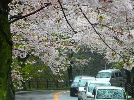 逗子市桜山^^