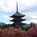 興福寺~五重塔