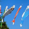 鯉幟~鶴舞公園
