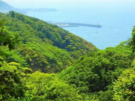 新緑の山~逗子 披露山