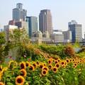 梅北ガーデン~向日葵