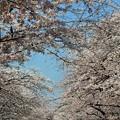 写真: 上野公園