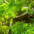 写真: 安國論寺~鎌倉