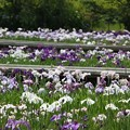 菖蒲園~横須賀