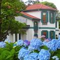 紫陽花~横浜山手