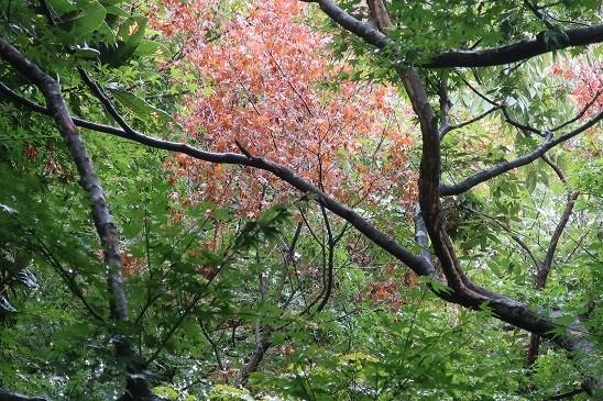 部分紅葉~蘆花公園