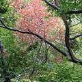 写真: 部分紅葉~蘆花公園