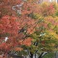 紅葉~栗東