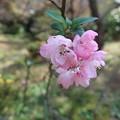 写真: 逗子蘆花記念館にて