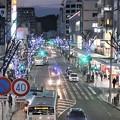 写真: イルミネーション~横須賀中央