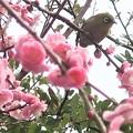 メジロ~北九州黒崎