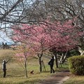 Photos: 逗子 大崎公園