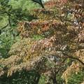 紅葉~日比谷公園