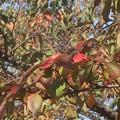Photos: 紅葉~稲荷山公園
