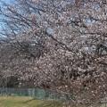 桜~つくば市