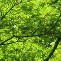 新緑~横浜公園