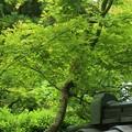 新緑~岩殿寺