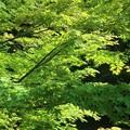 Photos: 新緑~鶴ヶ丘八幡宮