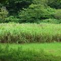 逗子 池子の森