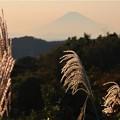 Photos: 秋の富士山~大町
