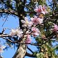 Photos: 十月桜~報国寺