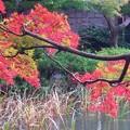 紅葉~御殿山