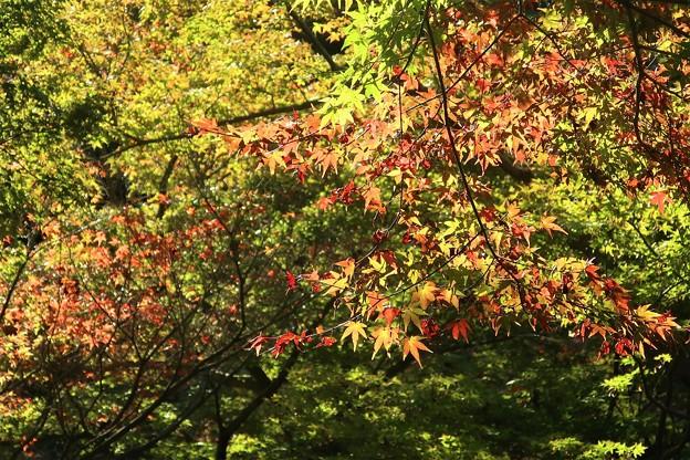 Photos: 紅葉~蘆花公園