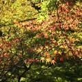 紅葉~蘆花公園