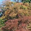 紅葉~葉山